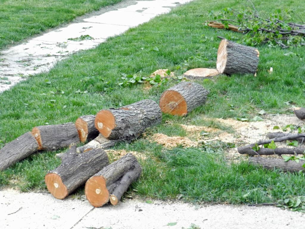 Alex Pear Tree Chunks