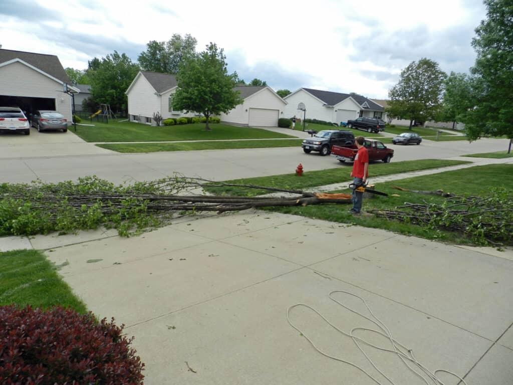Alex Pear Tree Down