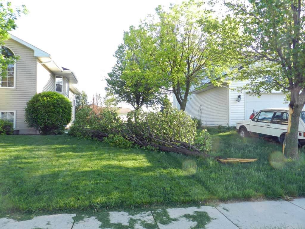 Pear Tree Damage Ground