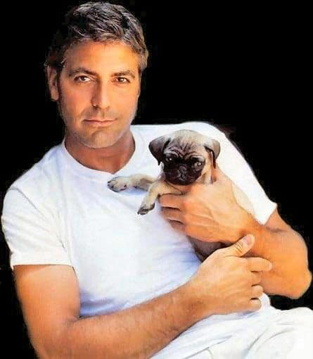 George Clooney dog