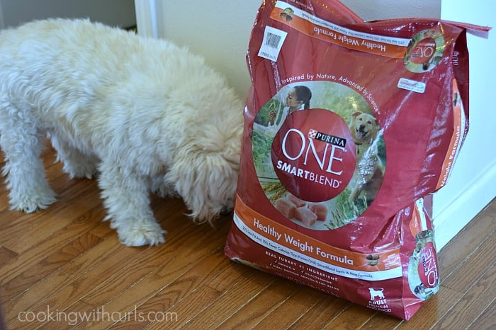 Purina One SmartBlend | cookingwithcurls.com | #28dayPurina #PurinaPup