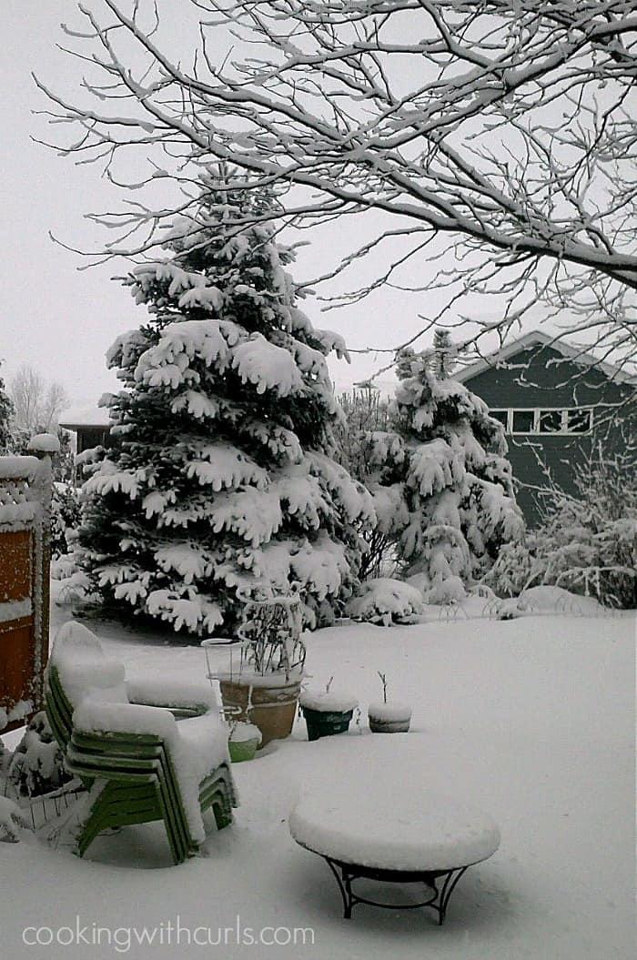 Snow Backyard Feb 1 2015 cookingwithcurls.com